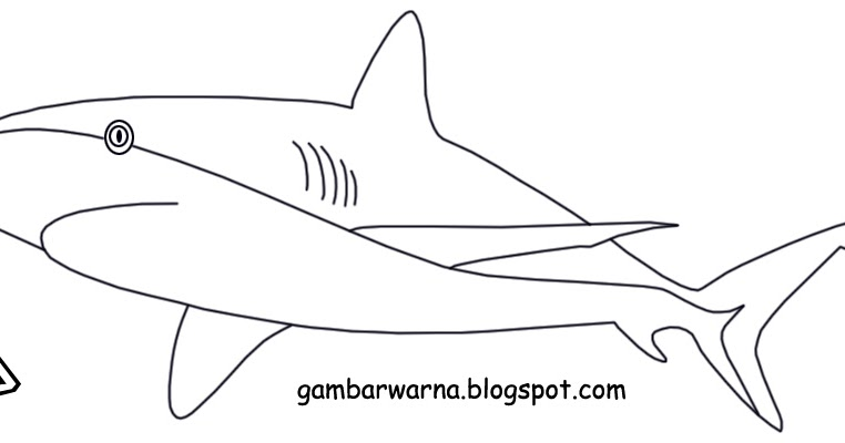 Spesial 54+ Gambar Ikan Hiu Yang Belum Diwarnai