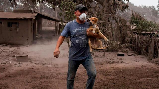 EE.UU: Cientos de animales son rescatados por los incendios en California