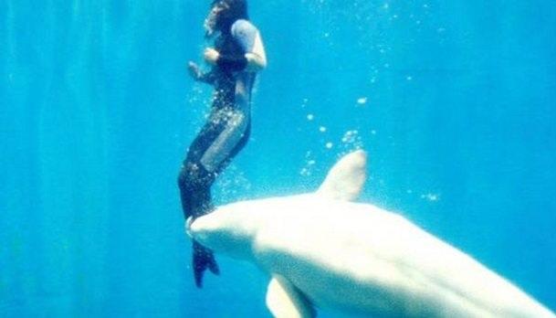 balena e bardhë me njëri