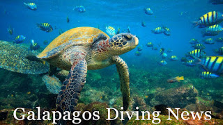 Galpagos Diving News