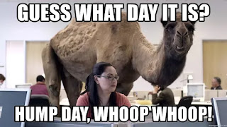 hump day quotes, hump day memes camel