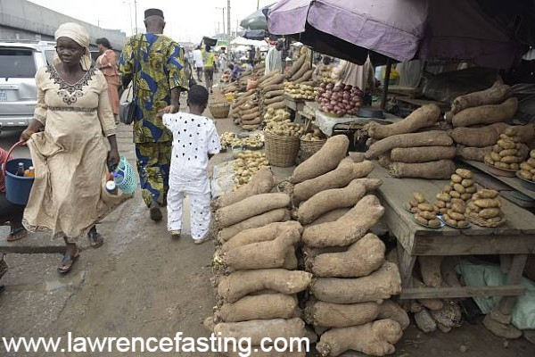 Starting Yam Farming In Nigeria (detailed guide)