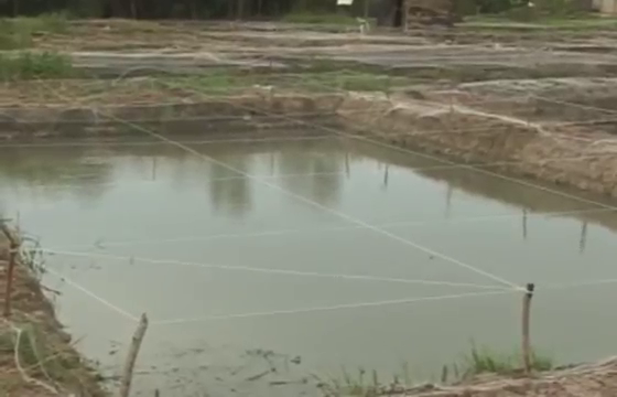 Pond building cost house of fishery lovers for Concrete pond construction