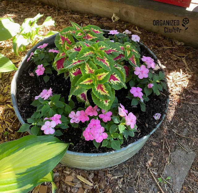 Photo of coleus & impatiens planted in a galvanized tray