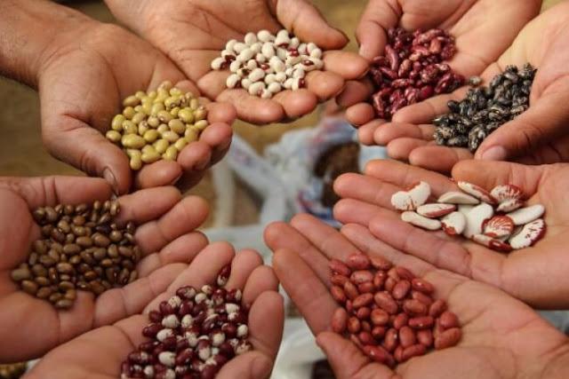 حلم البذور ، تفسير حلم البذور بالمنام ، تفسير حلم رؤية البذور فى المنام
