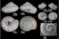 http://sciencythoughts.blogspot.co.uk/2014/02/three-new-species-of-vetigastropod.html