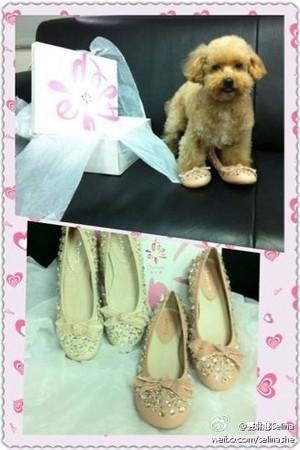 Pink Dog Shoes Adidas