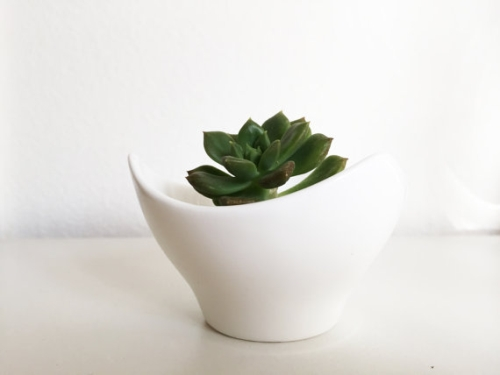 White Ceramic Pot Succulent Plant