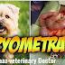 Pyomrtra In Dogs-Maaz veterinary Doctor