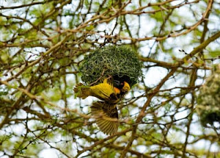 bird building nest can inspire you to overcome failure