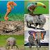 L'évolution - Un conte de fées moderne