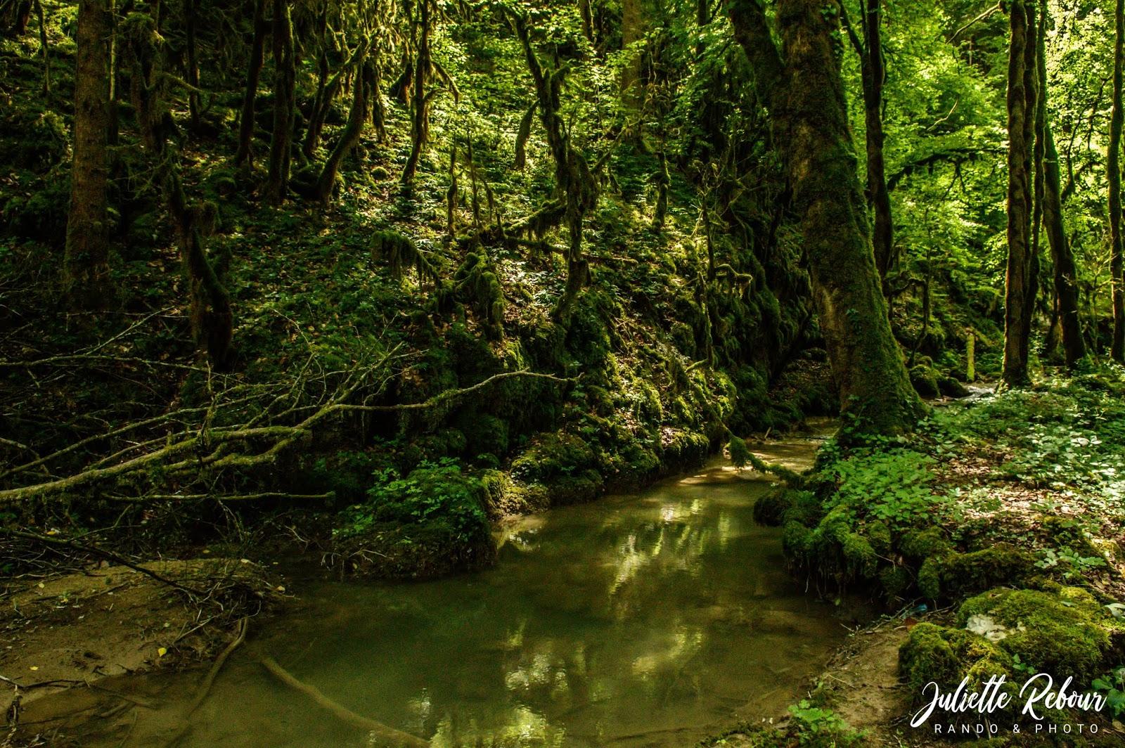 Randonnée dans la forêt dans le Jura