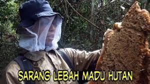 Jual Madu Asli Lebah Hutan Liar 100℅ Murni Tanpa Campuran