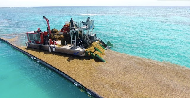 AlgeaNova instala primera planta para la transformación y valorización del sargazo en República Dominicana