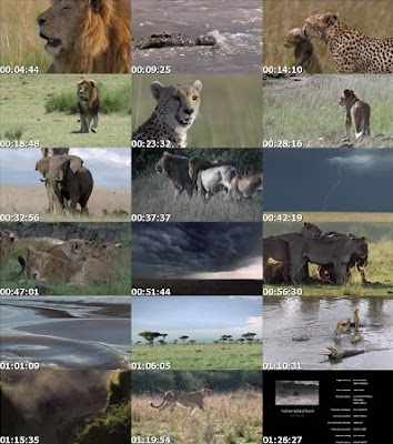 african-cats-DOCUMENTAL-Capturas