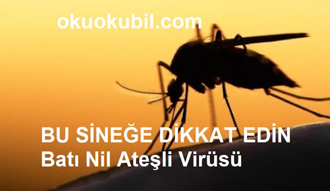 Batı Nil Ateşli Virüsü Taşıyan Sineğe Dikkat Edin