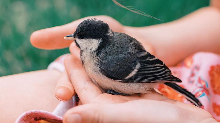 rescue birds for adoption near me