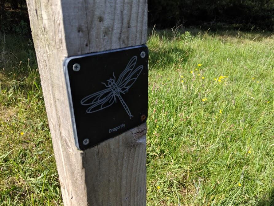 East Cramlington Nature Reserve Trail  - trail clues