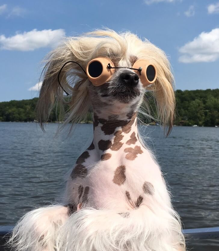 21 Cute Pictures Of Animals That Can Make Even The Worst Day A Bit Better - Don't think about all the bad stuff and get ready for the summer, just like this doggy.