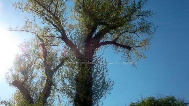 wohnen und wohlfühlen unter blauem Himmel