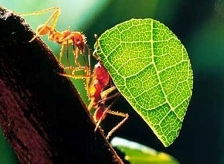 Animals Plants Rainforest Interesting Facts About Ant For