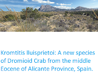 https://sciencythoughts.blogspot.com/2019/11/kromtitis-lluisprietoi-new-species-of.html