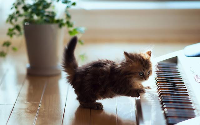 Kat speelt piano