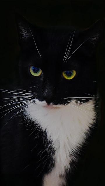 Black cat on a black background