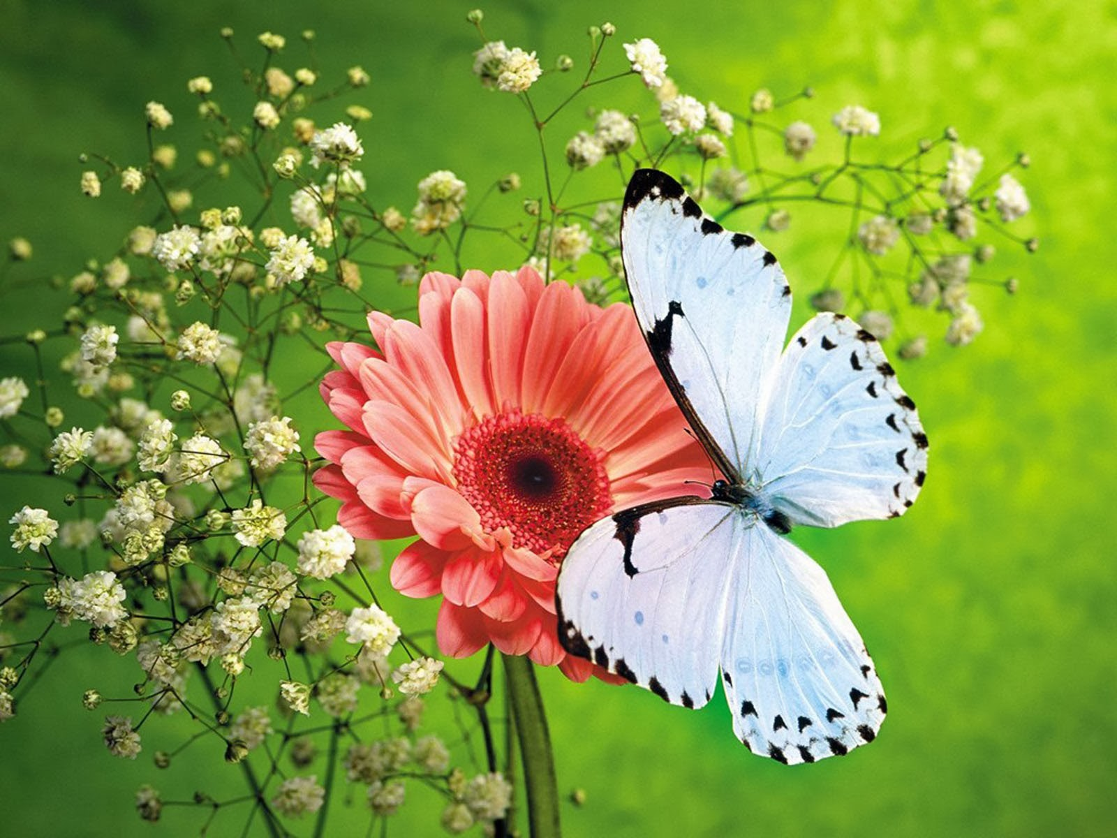 butterfly background - photo #28