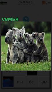 На полянке сидят семья коалы друг за другом держатся лапами