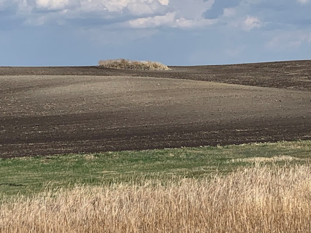 Photo of the results of years of tillage with black topsoil at the bottom of a hill