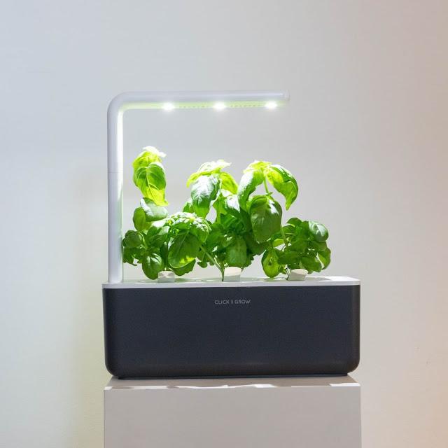 jardín inteligente gris con luces led y planta verde