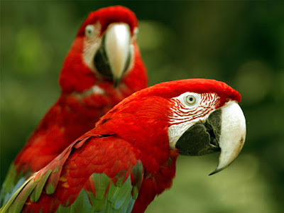 Wide Popular beautiful birds images/parrots hd image/parrots hd photos/ parrote hd wallpaper