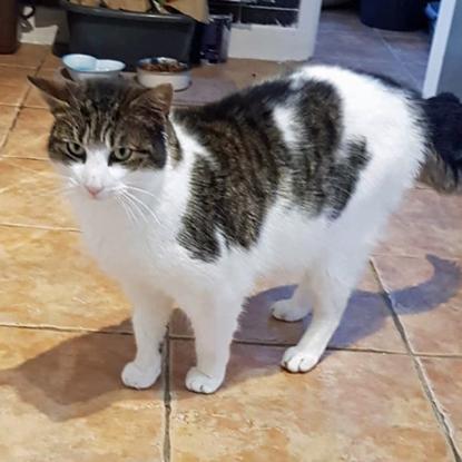 tabby-and-white cat standing on tiled floor