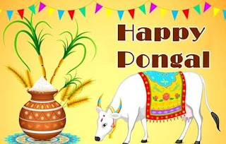 happy thai pongal wishes