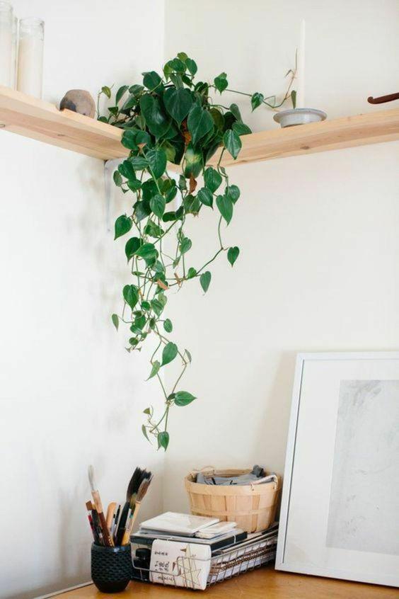 Plantas renovam qualquer ambiente