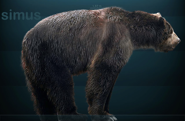 Short-faced bears, largest carnivores in the Ice Age, became omnivores to survive