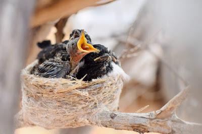 Realfood Sarang Burung Walet