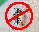 Cegah Penyebaran Virus Zika , Google Bantu 1 juta