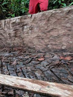 dugout canoe detail, el Oriente, Ecuador