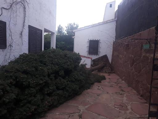 Caida ciprés grandes dimensiones por temporal, troceado y limpieza por Ruepra Jardinería