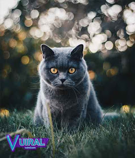 Contoh Hewan Vivipar Kucing