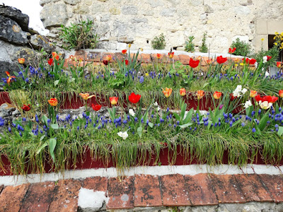 red & yellow tulips in Montresor France
