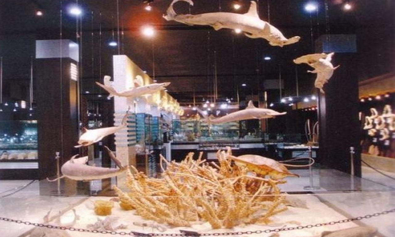 Harga Tiket Masuk Museum Kerang (Bali Shell Museum ...