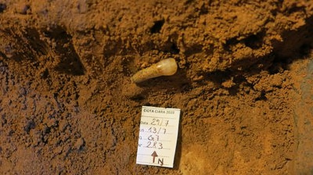 New remains of Neanderthal man dating back 300,000 years found in Italy's Ciota Ciara Cave