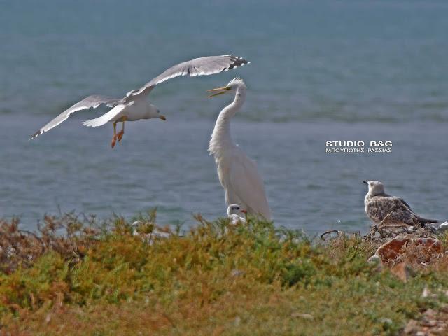 Παγκόσμια ημέρα αποδημητικών πτηνών