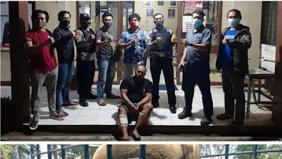 Polisi Hadiahi Timah Panas Pencuri Sapi di Sekincau Lambar