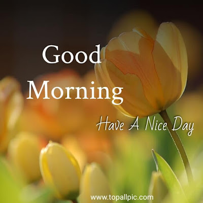 good morning images with flower rose for whatsapp