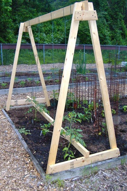 how to get tomatoes to grow hight not wide