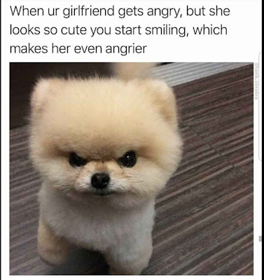 Funniest Cat and Dog Memes of the Day: Mood Changers